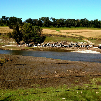 large dairy farm with a lovely trout stream in the pasture. well kept farm, fences, pastures.